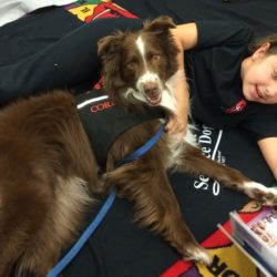 Cord, a certified therapy dog, listens while children read to him.