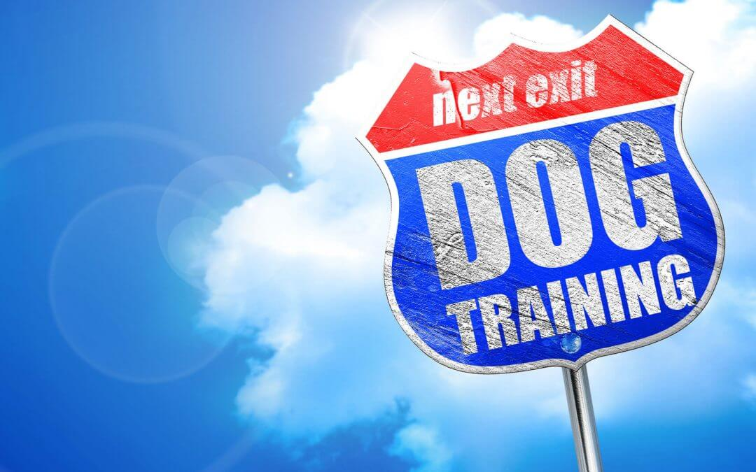 4 Things Dog Trainers Do That You May Not Be Doing.