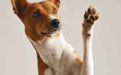 5 Common Dog Training Myths Busted!