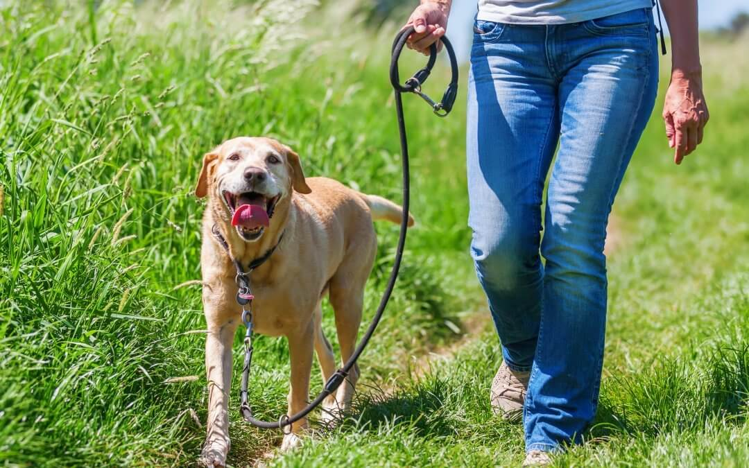 manners-for-mutts-hiking-with-dogs